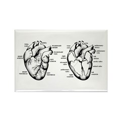 2 Hearts Rectangle Magnet (100 pack)