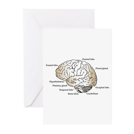 Brain Section Greeting Cards (Pk of 10)