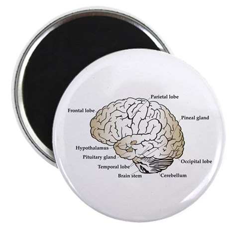 "Brain Section 2.25"" Magnet (10 pack)"