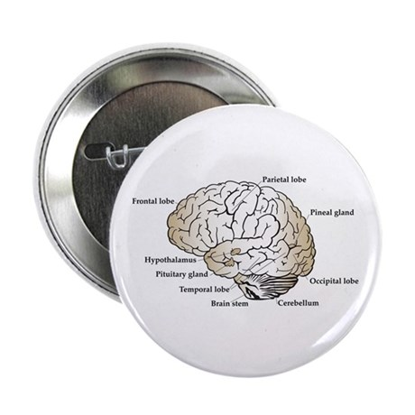 """Brain Section 2.25"""" Button (100 pack)"""