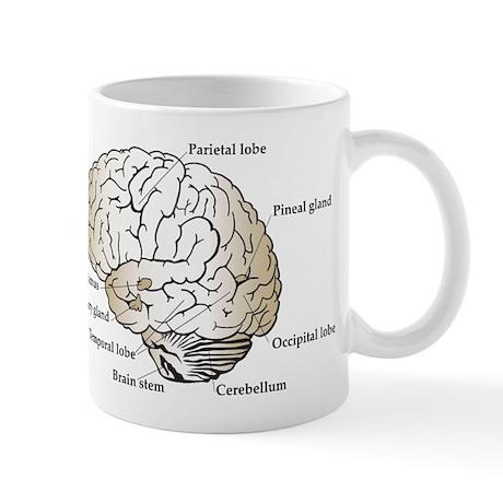 Brain Section Mug