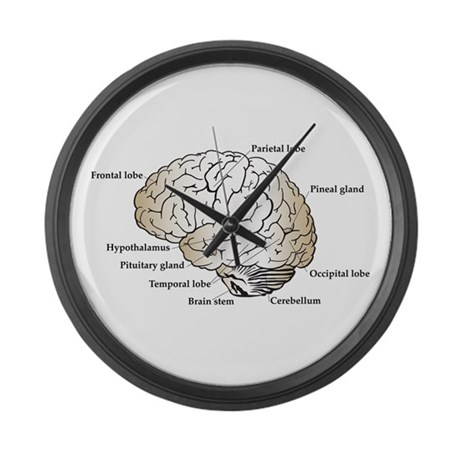 Brain Section Large Wall Clock