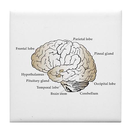 Brain Section Tile Coaster