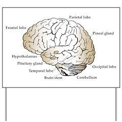 Brain Section Yard Sign
