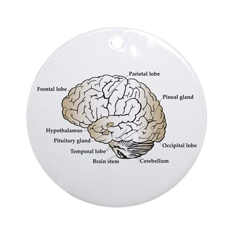 Brain Section Ornament (Round)