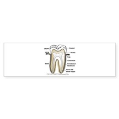 Tooth Section Bumper Sticker (10 pk)