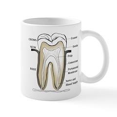 Tooth Section Mug