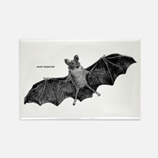 Vampire Bat Rectangle Magnet
