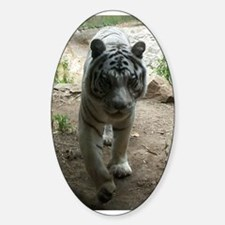 white tiger 8 Oval Decal