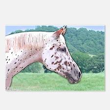 Leopard Appaloosa Meadow Postcards (Package of 8)