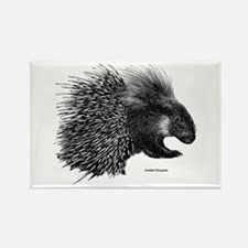 Crested Porcupine Rectangle Magnet