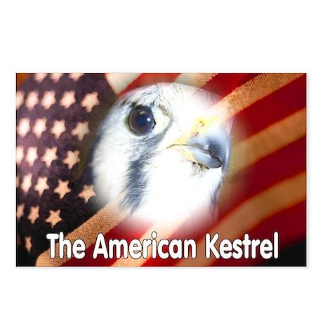 American Kestrel Postcards (Package of 8)