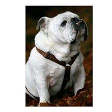 English Bulldog Postcards (Package of 8)