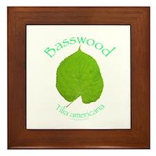 Basswood Leaf 1 Framed Tile