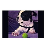 Boston Terrier's Try Harder Postcards (Package of