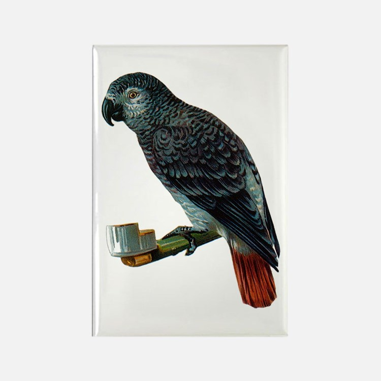 Gray Parrot Bird Rectangle Magnet