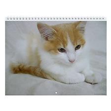 Feral Cats Wall Calendar