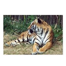 indochinese tiger Postcards (Package of 8)