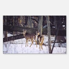 Winter Whitetail Deer Rectangle Decal