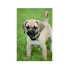 Puggle Rectangle Magnet