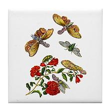 Maria Sibylla Merian I Tile Coaster