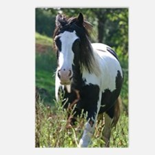 Gypsy Horse Postcards (Package of 8)