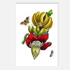 Maria Sibylla Merian VI Postcards (Package of 8)