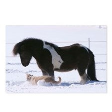 Funny Icelandic horse Postcards (Package of 8)