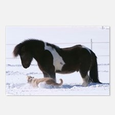 Cute Icelandic pony Postcards (Package of 8)
