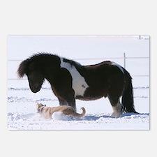 Unique Icelandic horse Postcards (Package of 8)