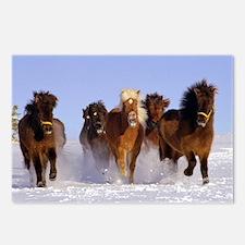 Cute Icelandic horse Postcards (Package of 8)