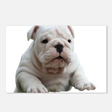 Bulldog 1 Postcards (Package of 8)