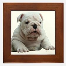 Bulldog 1 Framed Tile