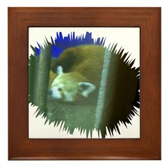 red panda 3 Framed Tile
