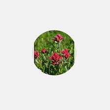 Indian Paintbrush Flower Song Mini Button