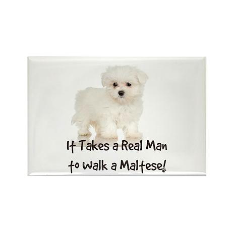Real Men Walk Maltese Rectangle Magnet (100 pack)