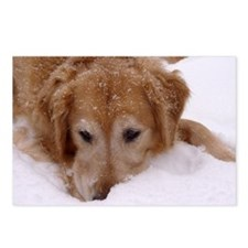 Winter Golden Retriever Postcards (Package of 8)