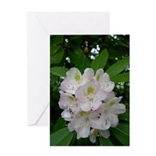 Great Rhododendrum Flower Son Greeting Card