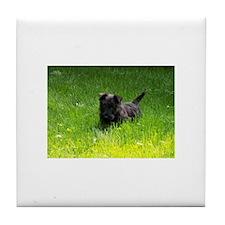 Unique Scottie puppy Tile Coaster