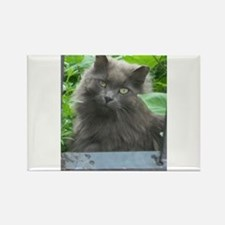 Long Haired Russian Blue Cat s Magnets