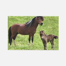 Mini Pinto Stallion & Daughte Rectangle Magnet