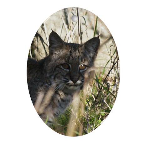 Bobcat in Brush Oval Ornament