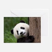 Greeting Cards (Pk of 10), Panda Cub