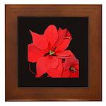 Poinsettia Framed Tile