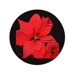 Poinsettia 3.5