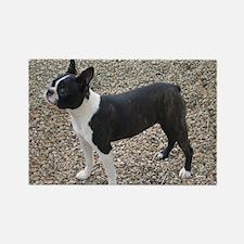 Boston Terrier Pup2 Rectangle Magnet