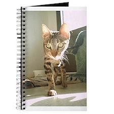 Cool Sokokes Journal