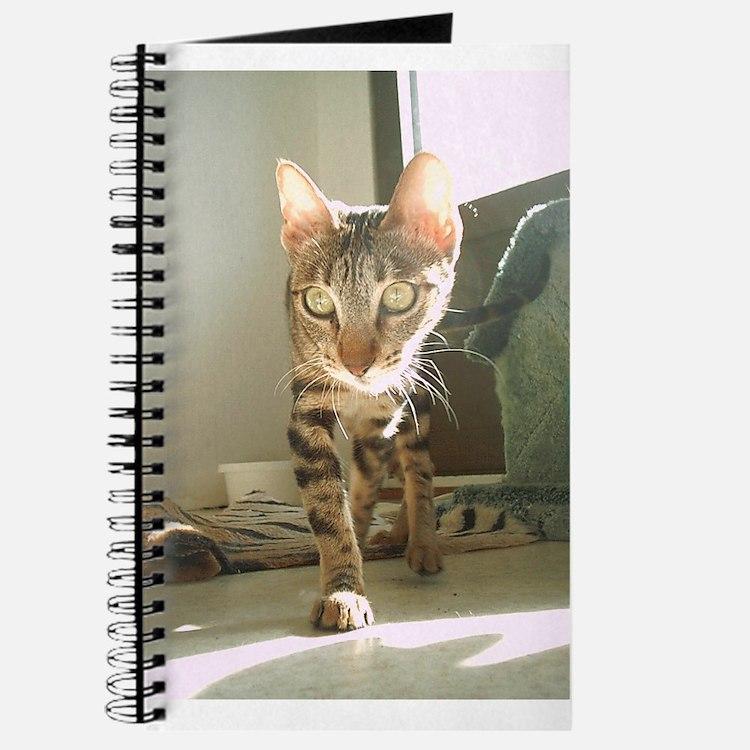 Cute Sokoke Journal