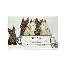 Old Age Scottish Terriers Rectangle Magnet (100 pa