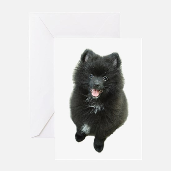 Adorable Black Pomeranian Puppy Dog Greeting Card